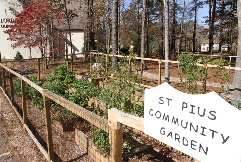 The community garden at St Pius X Church in Georgia, which was started in March. Photo: CNS/Michael Alexander, Georgia Bulletin