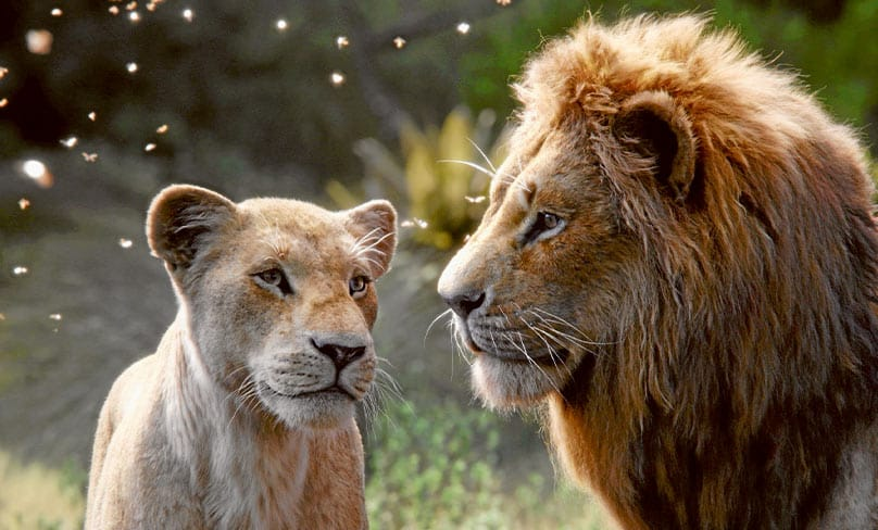 Nala is voiced by Beyonce Knowles-Carter, and Simba by Donald Glover. Photo: CNS photo/Disney